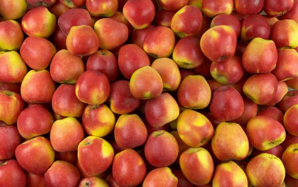 Obuoliai kriaušiniai