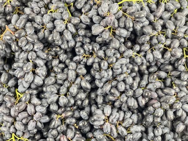 Mėlynosios besėklės vynuogės