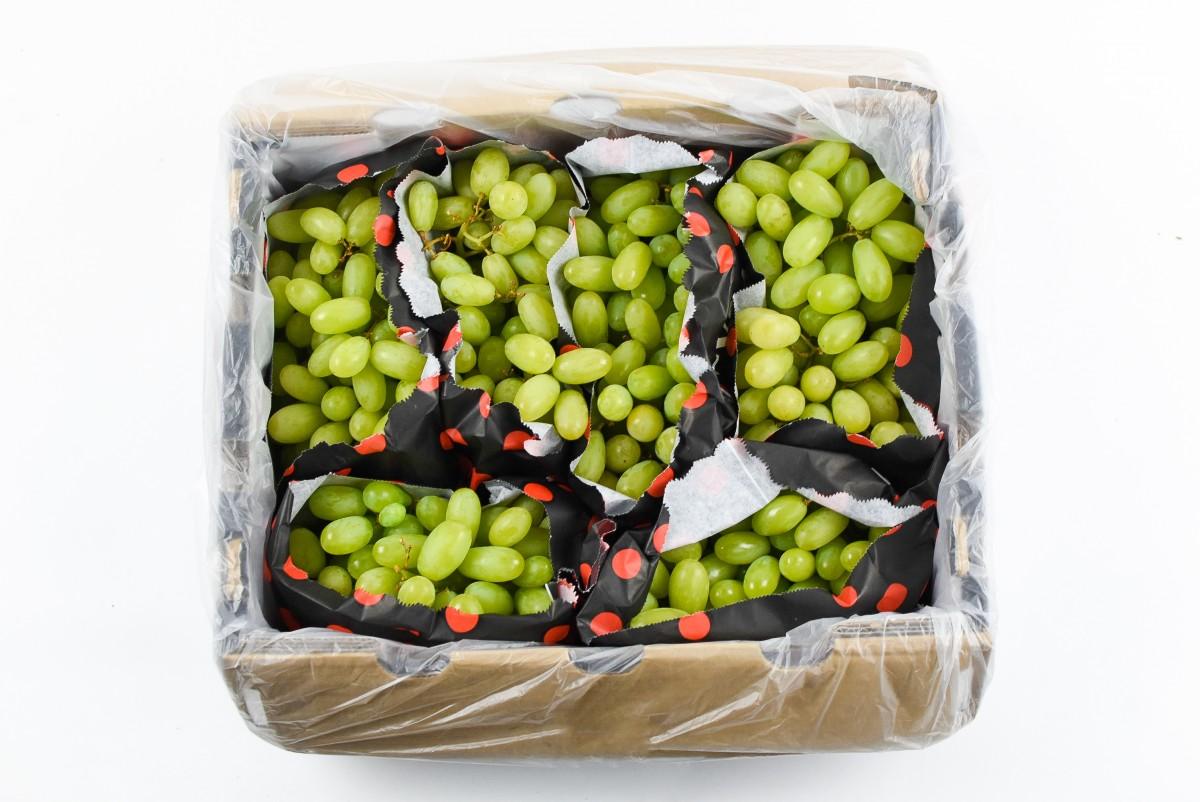 Žaliosios besėklės vynuogės